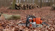 Med Jens og Henrik i skoven, del 3