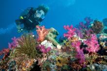 Australia tror på turistvekst etter ny serie fra David Attenborough