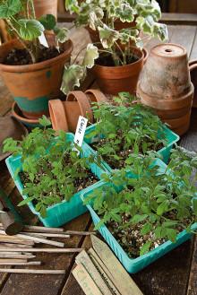 Dåligt förslag kan ge bakslag för ekologisk växthusodling
