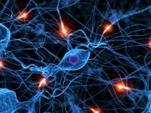 Ny teknik underlättar studier av hjärnceller vid stroke
