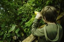1 642 växter från Costa Rica planteras i Universeums regnskog