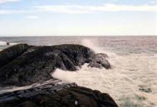 Havforsuring i kystsonen: Forvaltning og strategi