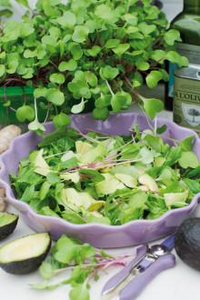 Grön trend - Odla ätbart i köksfönstret