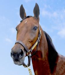 Vem blir Årets Häst 2015?