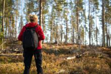 Brist på skötsel hotar skogens naturvärden