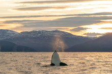 La esencia del ártico
