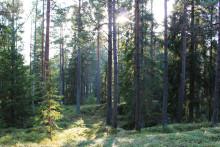 Nybildade skogsbolag certifierar sitt skogsbruk enligt PEFC