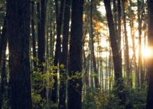 Rekordpriser på skogsmark i södra Sverige, nedgång i norra och mellersta Sverige