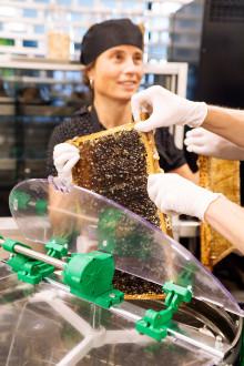 GöteborgsOperan presenterar honung och dukar