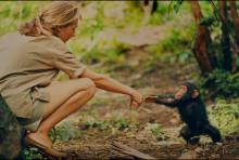 """Årets bedste dokumentarfilm i 2017: """"JANE"""" får premiere på National Geographic 17. marts"""