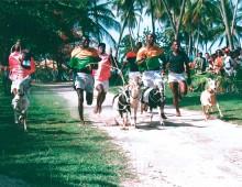 Påske på Tobago – væddeløb med geder