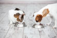 Så håller du din bästa vän i form - Vikt är det vanligaste hälsoproblemet hos katter och hundar