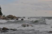 Giftiga ämnen försvårade utvecklingen av liv i haven