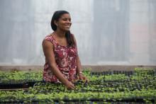 Fairtrade-märkta produkter såldes för 7,8 miljarder euro världen över