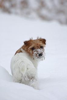 Så skyddar du husdjuren från julens faror