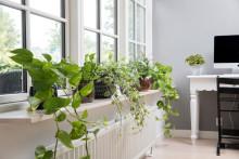 """Plantene gjør hybelen til """"hjemme"""""""