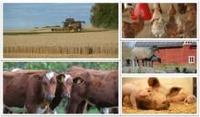 Jordbruksverket föreslår ett kombinerat areal- och djurbaserat krisstöd 2019