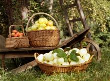 Äppelfestival med Nordiska museet