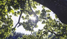 7 av 10 svenskar önskar miljövänlig begravning