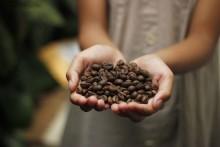 Kaffebönor – olika sorter