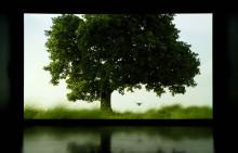 Bildmuseet presenterar: Amar Kanwar / The Sovereign Forest