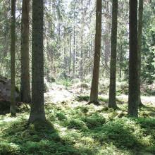 Skogsbruk i ett förändrat klimat – hur påverkas mångfald och miljö
