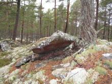 Utökat skydd av skog i Skövde och Götene