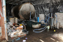 Cattle shed laundering plant uncovered