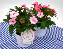 Dagens Rosa Produkt 15 oktober - en Lyckliga Lotta från Mäster Grön