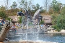 Tierschützer entsetzt - Noch immer Psychopharmaka-Einsatz in deutschen Delfinarien