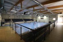 Skellefteå värd för U19-Finnkampen i innebandy 2017
