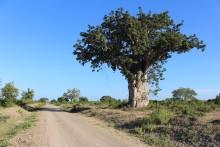 Tvivelaktigt bistånd till storskaligt jordbruk i Tanzania
