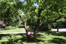Väsbybor får stadspark genom demokratiprojekt