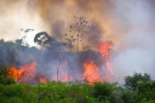 Skovbrande i verden: Hvor brænder det, hvorfor og hvad kan vi gøre?