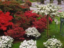 Nyfiken på nya härliga vårazaleor? - En färgrik vårazaleautställning kommer till Sverige.
