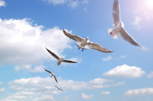 Vertikal ledarutveckling, en förutsättning för att klara morgondagens komplexa utmaningar.