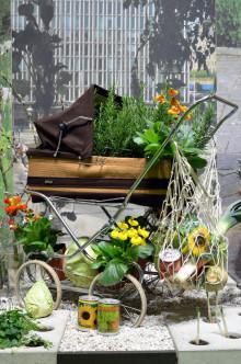 Hydro - stadsodling inspirerar till odling i kärl och betong