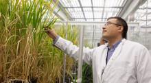 Kinesisk investerare satsar  på SLU-forskares klimatris