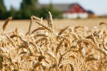 Sverige måste säkra de egna livsmedlen