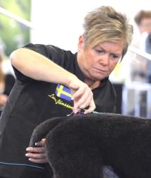 Permiär för certifiering av hundfrisörer
