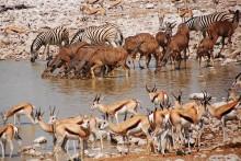NEW – A Taste of South Africa Plus Safari