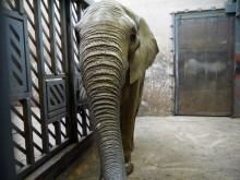 Ny elefanttjur till Borås Djurpark