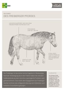 Factsheet zu den Freiberger Pferden