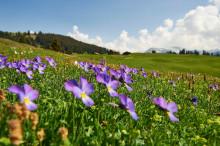 Wie wäre es wenn...? Vom Frühling in der Schweiz träumen.