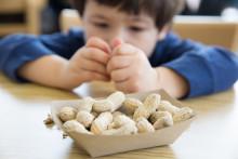 Blir fler barn allergiska mot mat?