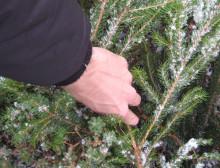 Lad juletræet gøre nytte i haven efter jul
