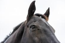 Evidensia på Falsterbo Horse Show