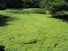 Länsstyrelsen tar bort ny invasiv art från skånsk damm