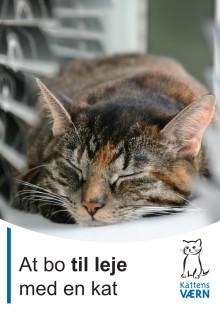 At bo til leje med en kat