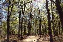 Utökning av naturreservatet Bokhultet